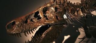 Paläontologie: Einmal Dino-Kot für 30 Euro, bitte!