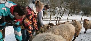 BioScha(r)f: Reichshofer Schüler verkaufen Pilze und züchten Schafe