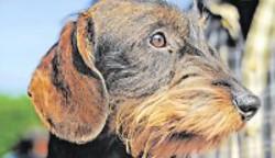 Unternehmen Hundezucht - Milliardengeschäft mit Vierbeinern