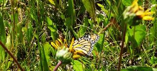 Der Schlag des Schmetterlings