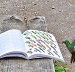 Googles Hummingbird - praktische Tipps