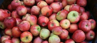 Achtung, Äpfel!