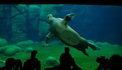 Eröffnung des neuen Eismeers im Hamburger Tierpark Hagenbeck (Photo) [1]