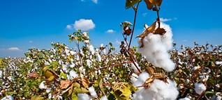 Stolz und Fluch: Usbekistan und die Baumwolle