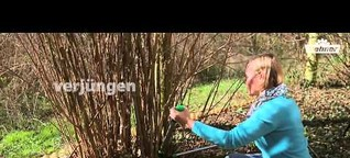 Besser gärtnern mit Dehner - Gehölze im Frühjahr schneiden