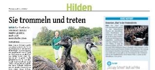 Emus auf der Weide