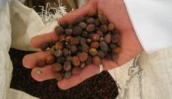 Kein Kaffee in Mokka - Effilee