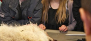 In Denmark, Animal Dissections at Museums Draw Student Crowd