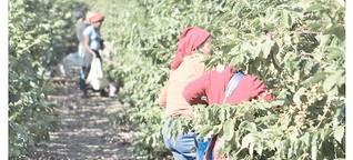 Bei Südafrikas Kaffeefarmern