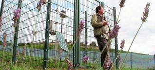 Ein Stück Provence in Konz: Lavendel blüht im Weinberg (dpa)