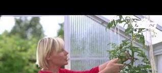 Tomaten Vielfalt - Dehner Ratgeber