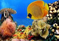 Unterwasser-Fotografie