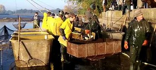 So funktioniert das Abfischen in Thalberg