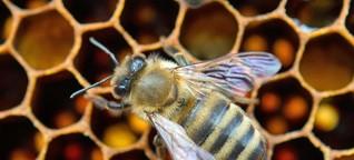 Onlineshop: Honig aus Nachbars Garten im Kuvert