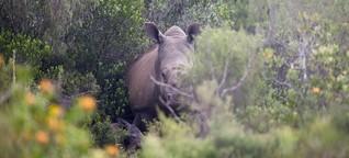 Konferenz in Südafrika: Folter im Namen des Tierschutzes