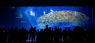 Live aus dem Aquarium