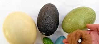 Emu, Nandu oder Strauß: Alternativen zum Frühstücksei