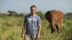 Engagiertes TV-Projekt: Schauspieler Hannes Jaenicke setzt sich für Elefanten ein