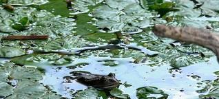 Donaudelta in Rumänien: Bullerbü auf Hartz IV - SPIEGEL ONLINE