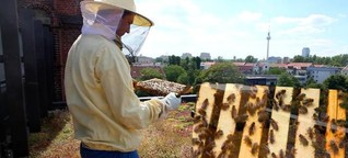 Stadtimker Norman Linke setzt sich für die Rettung der Honigbienen ein
