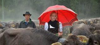 Almabtrieb im Allgäu: Runter mit dem Rind - SPIEGEL ONLINE