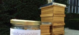 Bienen am Bundestag – Reiche Ernte fürs Volk?