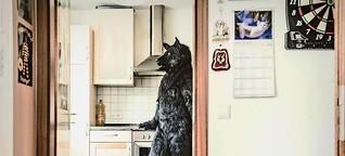 Ein Mensch im Wolfspelz