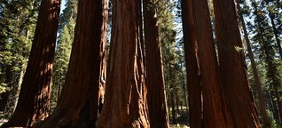 Kalifornien: Seid umarmt, Giganten!