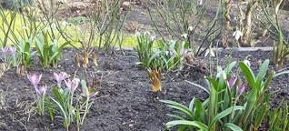Frühling ist, wenn du alle 2 Std. auf die Terrasse gehst und jedes Mal neue Blüten da sind:grinning: