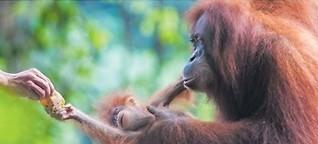 Dem Orang auf die Pelle rücken