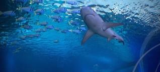 Australien bekämpft Haie jetzt per Gesichtserkennung
