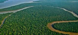 Vorläufig gerettet: das Renca-Schutzgebiet  in Brasilien