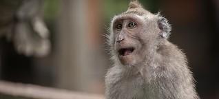 Sprachevolution: Das verborgene Sprachtalent der Affen