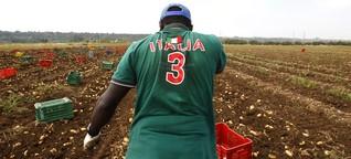 Flüchtlinge in Italiens Landwirtschaft: Refugees Welcome im Knochenjob
