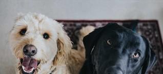 Haustier-Hilfe: Tipps & Tricks für Ottensens Hundehalter