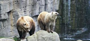 Wenn zwei Bärenarten sich mögen