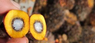Jetzt neu: Palmöl drin, Palmöl drauf!