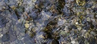 Trinkwasser: Chemie im Blut