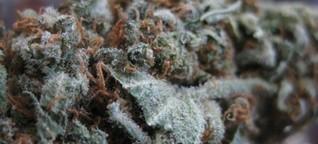 """""""Das perfekte Gras"""": Die große Kunst beim Anbau von Highend-Cannabis - WELT"""