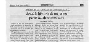 Brad, un jet set perro callejero mexicano