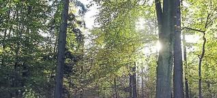 """Buch: """"Wilde Wälder"""" von Roger Deakin"""