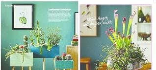 Fotoproduktion: Zimmerpflanzen