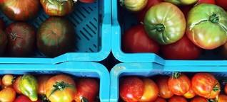 Alles rund um die Tomate
