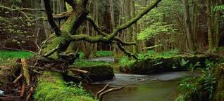 Planet Wissen: Die Deutschen und ihr Wald