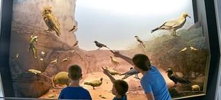 Naturkundemuseum in Tel Aviv: Löwe, Bär und ihr mächtiger Feind