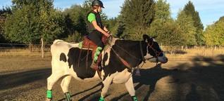 Auf dem Rücken der Kühe | Kuhreiten bzw. Kuhreitsport in Brandenburg