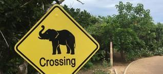 Sri Lanka für Entdecker: Zweimal Dschungel, bitte!