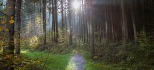 Der ideale Wald