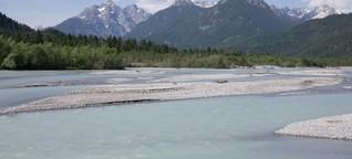 Ein gezähmter Fluss wird wieder wild