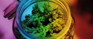 Marihuana: Zucht und Unordnung